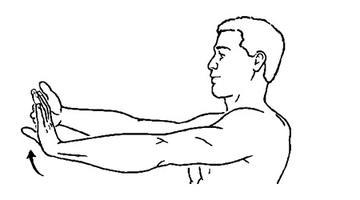 wrist flexor